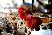 Nguy cơ cúm A/H7N9 xâm nhập từ Trung Quốc
