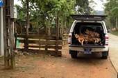 Tỉnh ủy chỉ đạo làm rõ vụ xe công chở gỗ lậu