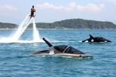'Cưỡi' cá mập, cá heo tuyệt đẹp trên biển Nha Trang