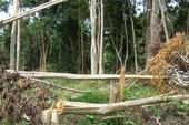 Cách chức Bí thư chi bộ công ty lâm nghiệp để mất rừng