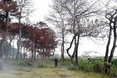 Truy tìm kẻ bức tử 102 cây thông