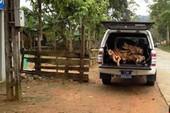 Sở Y tế Quảng Bình báo cáo vụ xe công chở gỗ lậu