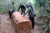 Đề xuất tặng gỗ tang vật cho người nghèo