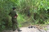 Khởi tố vụ bé gái 13 tuổi ở Hậu Giang bị giết, chôn xác