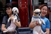 'Chính sách nuôi 1 chó' gây xôn xao tại Trung Quốc
