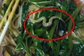 Hoảng hốt vì phát hiện rắn trong tô hủ tiếu