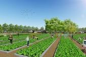 Dự án đầu tiên ở Sài Gòn có vườn rau sạch