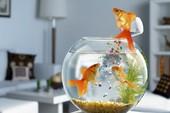 Những vị trí tuyệt đối tránh khi đặt bể cá trong nhà
