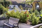 Biến sân vườn thành ốc đảo xanh mát nhờ vài mẹo nhỏ