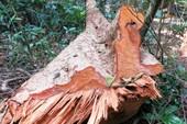 Công bố hiện trạng rừng toàn quốc