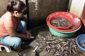 Bắt quả tang cơ sở bơm tạp chất vào tôm ở chợ đầu mối