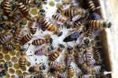 1 phụ nữ ngất xỉu vì bị ong rừng đốt