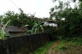 2 người tử vong khi khắc phục hậu quả bão số 2