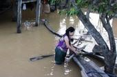 Nghệ An: 600 người đang cứu đê sạt lở