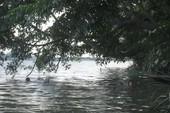 Tắm sông năm trẻ bị chết đuối