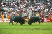 Chùm ảnh: Gần 40.000 người xem lễ hội chọi trâu ở Đồ Sơn