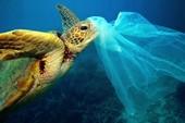 Nhựa không phải là thức ăn của động vật biển