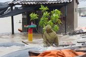 Phát hiện cây xăng 'chặt chém' dân sau bão