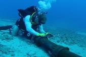 Clip các nhà khoa học 'minh oan' cho cá mập về việc đứt cáp quốc tế