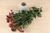 Mẹo Hay Dễ Làm: Mẹo triệt tiêu mùi hôi trong nhà