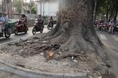 Người dân tiếc nuối mất hàng cây đường Tôn Đức Thắng