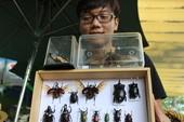 Thú chơi bọ cánh cứng khó cưỡng của giới trẻ