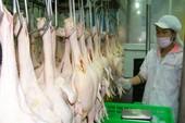 Người Việt nên dùng gà Việt trong bữa cơm