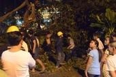 Video: Cây bồ đề đổ sập, 3 anh em thoát chết