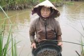 Quảng Nam: Nhọc nhằn tuổi già mò ốc