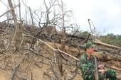 Khởi tố vụ án phá rừng tại Quảng Nam