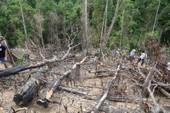 Thêm 2 cán bộ BQL rừng phòng hộ Sông Tranh bị bắt