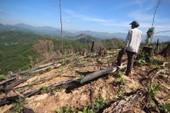 Phá rừng Tiên Lãnh: Bí thư và chủ tịch xã bị kỷ luật