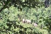 Cả đàn voi rừng về sống cạnh nương rẫy của dân