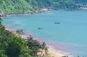Vệt nước đỏ ở biển Đà Nẵng là ấu trùng ruốc