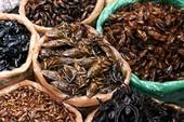 Cẩn thận khi ăn côn trùng kẻo bị trúng độc