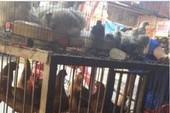 Giết mổ gà, vịt tại chợ coi chừng bị phạt