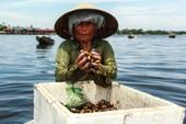 Chùm ảnh: Nhọc nhằn bắt trìa trên phá Tam Giang