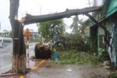 Chùm ảnh: Quảng Bình tan hoang sau bão số 10