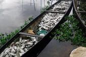 Hơn 37 tấn cá nuôi lăn ra chết trên sông Đại Giang