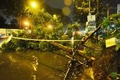 Người đi đường hoảng hốt khi cây xanh bật gốc trong cơn mưa lớn