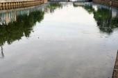 Cá lại nổi đầy kênh Nhiêu Lộc - Thị Nghè