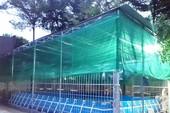 Trường thu tiền học bơi nhưng xây bể không như cam kết