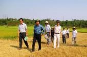 Nguyên Chủ tịch tỉnh Gia Lai bị kiểm tra vi phạm