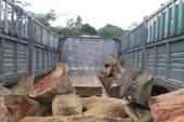 Giả giấy tờ để vận chuyển gỗ lậu qua biên giới