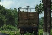 Xe gỗ lậu gần đồn biên phòng, kiểm lâm bị kiểm điểm