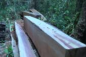 Chở gỗ tang vật, hạ luôn gỗ ở Khu Bảo tồn thiên nhiên