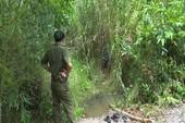 Xác bé gái 13 tuổi bị chôn trong bụi cây