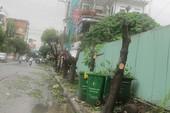 Đà Nẵng: Đốn cây hàng loạt vì sợ… bị sâu đục thân