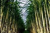 Hỗ trợ lãi suất cho DN tạm trữ 200.000 tấn đường