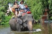 Những phương tiện di chuyển đặc biệt trong lũ Thái Lan